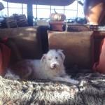 Honden - Loki en Sara (2)