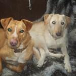 Honden - Mannaz en Sara