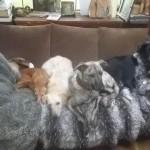 Honden - Quita, Ninio (zonder, Loki, Sara en Fabio)