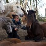 Norma - paarden (4)
