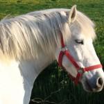 Paard - Claudi 01