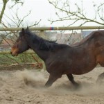 Paard - Lars 02