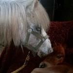 Paard - moeder van Yzir (2)
