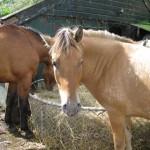 Paarden - Boeffie Skealt